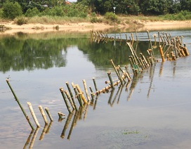 """Bi hài cảnh """"trận địa"""" cọc tre dàn kín mặt sông chống tàu cát tại Thừa Thiên Huế"""
