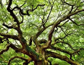 Cần thêm 1 nghìn tỷ cây xanh nữa để giải quyết bài toán CO2!