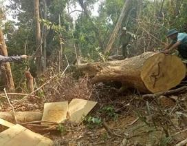 Thành lập Ban Chỉ đạo công tác bảo vệ rừng