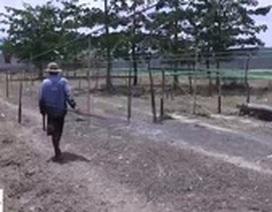 Những người làm nghề kéo dây thừng ở TP.HCM