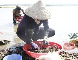 Đổ xô đi đãi hến mùa nước cạn ở hồ Ea Kao
