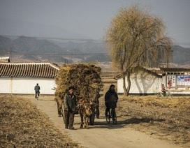 Triều Tiên thừa nhận hạn hán kỷ lục, đối mặt nguy cơ thiếu lương thực
