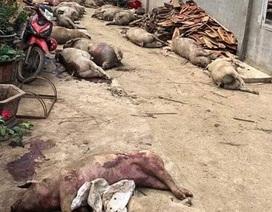 Nhiều xác lợn vứt dưới suối dương tính với vi rút tả lợn Châu Phi
