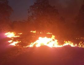 15ha rừng bị thiêu rụi sau 5 giờ hỏa hoạn