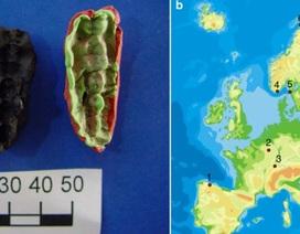 """""""Kẹo cao su cổ đại"""" lưu giữ DNA của loài người từ 10.000 năm trước"""