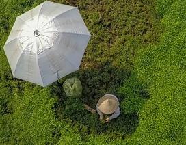"""Nông dân vác """"bảo bối"""" ra đồng để chống chọi nắng nóng 40 độ C"""