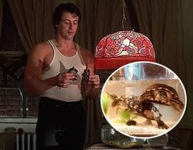 """Sylvester Stallone vẫn nuôi hai chú rùa trong phim """"Tay đấm huyền thoại"""" sau 40 năm"""