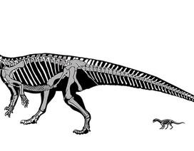 Loài khủng long kì lạ biết bò trước khi biết đi giống như con người