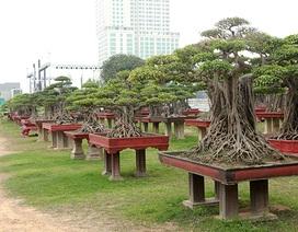Vườn cây nghệ thuật di sản 300 tỷ đồng độc nhất vô nhị tại Việt Nam