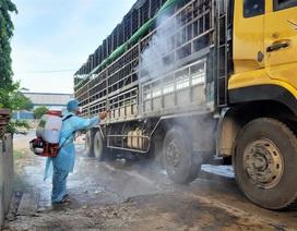 Quảng Nam: Phát hiện xe tải chở lợn bị nhiễm dịch tả lợn châu Phi đi... bán