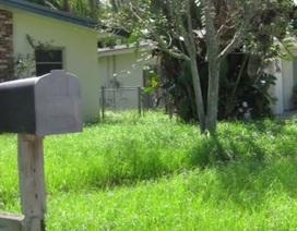 """""""Ngã ngửa"""" trước nguy cơ mất nhà chỉ vì để cỏ mọc quá cao"""