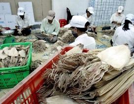 """Người Hàn """"chuộng"""" mực, bạch tuộc, doanh nghiệp thủy sản Việt """"hốt bạc"""""""