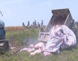 Thanh Hóa: Dân ngăn cản không cho tiêu hủy lợn dịch tả châu Phi ở trong thôn