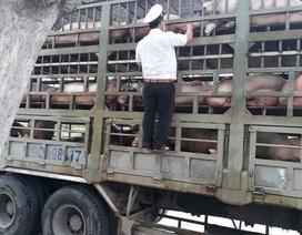 Đà Nẵng xuất hiện dịch tả lợn châu Phi