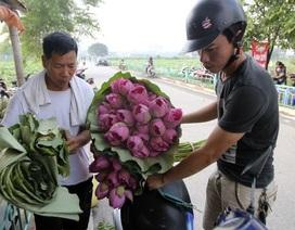 """Bí quyết """"nằm lòng"""" phân biệt hoa sen với quỳ để tránh bị lừa khi mua"""