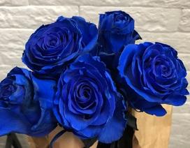 """Hoa hồng xanh nhập khẩu vài trăm ngàn đồng/bông, không vào dịp lễ cũng """"cháy hàng"""""""