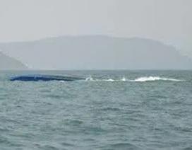 Hai vợ chồng tử nạn trên biển khi đi câu mực