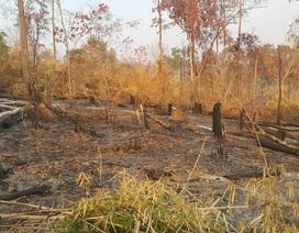 Ban quản lý rừng Đức Cơ để mất hơn 9.000ha rừng