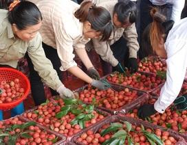 260 chủ vựa Trung Quốc tranh mua, vải thiều Bắc Giang giá cao kỷ lục
