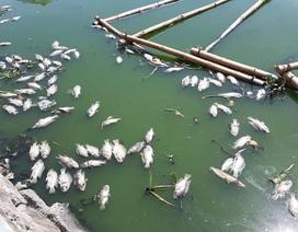 Cá chết nổi trắng hồ ở trung tâm thành phố Đà Nẵng