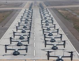 """Hơn 40 trực thăng quân sự Mỹ phô diễn uy lực trong tập trận """"Voi đi bộ"""""""