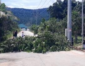 """Cư dân """"đảo ngọc"""" Phú Quốc lại chặt cây ngăn đường chặn xe rác"""