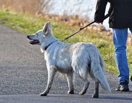 """Chó bị """"lây"""" căng thẳng từ chủ nhân"""
