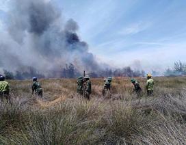 Hàng trăm người căng mình chữa cháy rừng phòng hộ ven biển