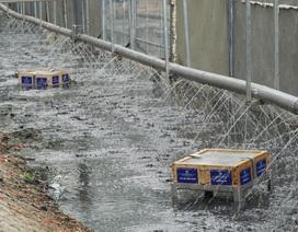 """Xem """"màn trình diễn"""" biến bùn thành CO2 và nước trên sông Tô Lịch"""