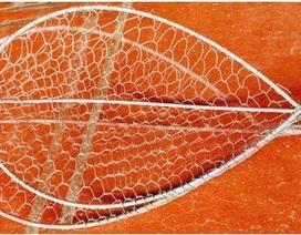 Đi chích cá sau lũ, nam sinh bị điện giật tử vong