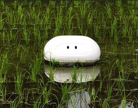 """Người Nhật sáng chế robot """"làm việc"""" ngoài ruộng lúa"""