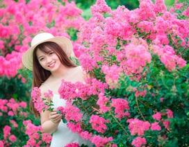 """Phát """"sốt"""" với con đường hoa tường vi đẹp như mơ ở Hà Nội"""