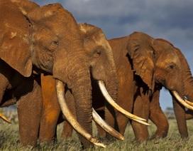 Kinh tế khủng hoảng, Zimbabwe liên tục rao bán voi, ngà voi, sừng tê giác