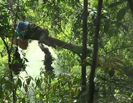 Sang Lào bắt ong, bị ong đốt tử vong