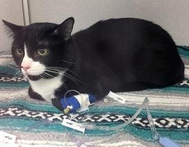 Chú mèo suýt chết vì bị quay hơn 30 phút... trong máy giặt