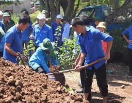 Đoàn viên, thanh niên Quảng Trị trồng hoa giấy làm đẹp đảo Cồn Cỏ