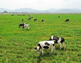 """Đầu tư 120 triệu USD – Vinamilk hợp tác xây dựng Tổ hợp """"Resort"""" bò sữa Organic tại Lào"""