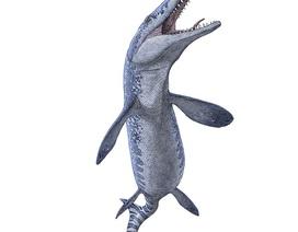Bất ngờ tìm thấy hoá thoạch quái vật biển cổ đại khi khai thác đá quý