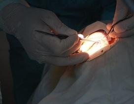 Lần đầu tiên ghép giác mạc thành công cho 2 bệnh nhân từ 1 cựu binh hiến tặng