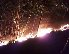 Rừng keo ở Quảng Nam cháy từ chiều qua đến giờ chưa tắt
