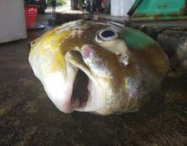 """Cá vàng dương ngon hiếm vừa cập bến, đã được mối buôn """"hốt sạch"""""""