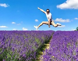 Cánh đồng hoa oải hương tĩnh lặng bỗng chật cứng khách du lịch