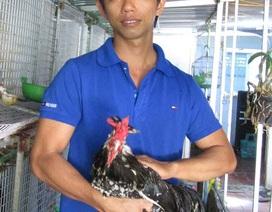 Kỹ sư điện tử bỏ về quê nuôi chim, gà độc, lạ, thu hàng trăm/năm