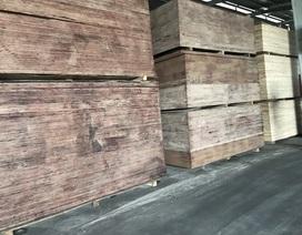 Mất 90% thị phần vì bị Trung Quốc phá giá, doanh nghiệp gỗ ép Việt điêu đứng