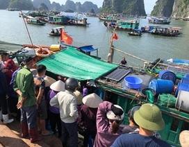Bé trai 4 tuổi trượt chân rơi từ trên thuyền xuống biển Hạ Long