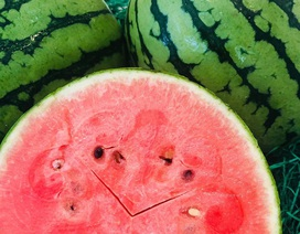 Vài triệu đồng/quả dưa hấu Nhật, người không hảo dưa cũng mua vài quả ăn dần