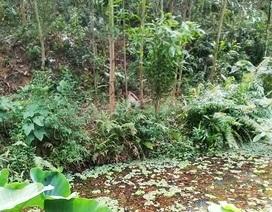 Kinh hãi phát hiện thi thể đàn ông đang phân hủy trong rừng keo
