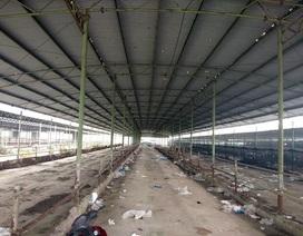 """Dự án nuôi bò 4.500 tỷ liên quan con trai ông Trần Bắc Hà """"trôi êm"""" tại kỳ họp HĐND tỉnh"""