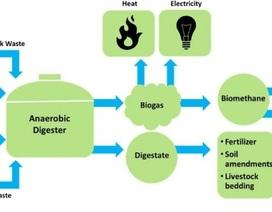 Nhiêu liệu sinh học low-carbon: Nhiều thân thiện môi trường