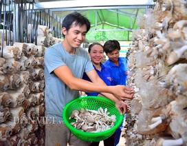 Kiên Giang: Bỏ việc thành phố về quê trồng nấm bào ngư Nhật Bản